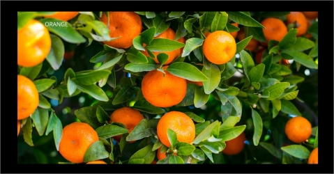Bougie parfumée à l'orange - Escapade Gourmande - Lorenza-difilippo.fr