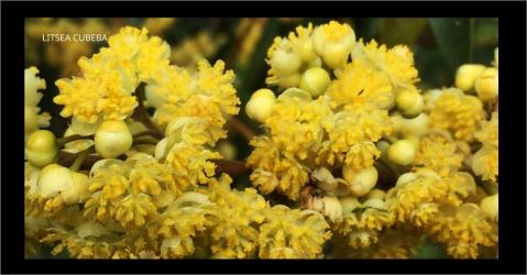 Parfum d'ambiance aux notes florales - Plaisir des Sens - Lorenza-difilippo.fr