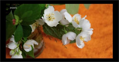 Parfum d'intérieur aux notes florales - Plaisir des Sens - Lorenza-difilippo.fr