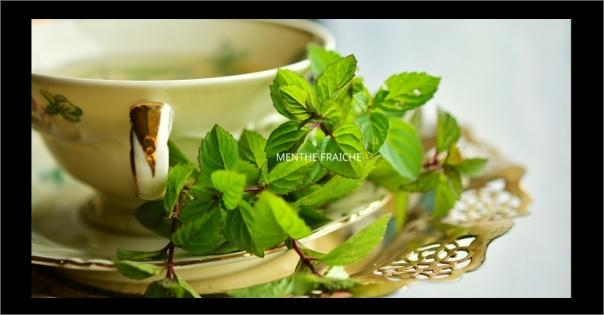 Parfum d'ambiance à la menthe fraîche - Menthe Fraîche - Lorenza-difilippo.fr