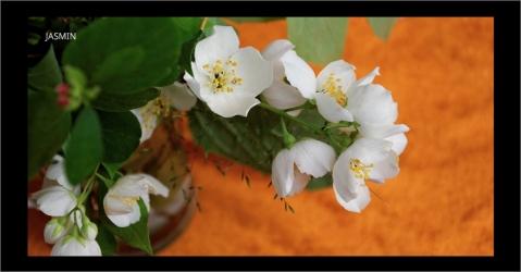 Parfum d'ambiance au jasmin et à la menthe - Menthe fraîche - Lorenza-difilippo.fr