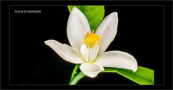 Parfum d'intérieur à la fleur d'oranger - Douceur Hawaïenne - Lorenza-difilippo.fr