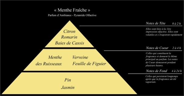 Pyramide olfactive Parfum d'ambiance Menthe Fraîche - Lorenza-difilippo.fr